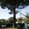 Potatura totale pino del giardino