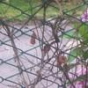 Rifare rete recinzione rigida circa 40 metri linear