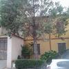 Estirpare un albero alto circa 10 m