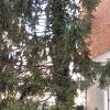 Il giardino prospetta sulla via srocchino di bs centro e il pino è mediamente alto m  11,00 circa (supera i 3 piani della palazzina)