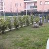Piantumazione giardino