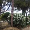 Perizia agronomo per abbattimento albero - roma