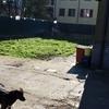 Rifacimento cortile abitazione