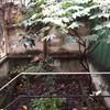Potatura albero di nespole e sistemazione piccolo giardino