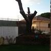 Potatura tronco quercia troppo alto