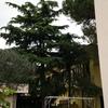 Potatura 4 alberi alto fusto