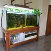 Sostituzione vetro frontale acquario