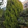 Spostamento piante