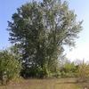 Abbattimento alberi portaluppi