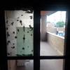 Sostituzione vetro finestra in legno