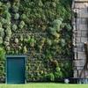 Paesaggista piante ufficio