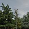 Abbattere una decina di alberi ad alto fusto