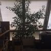 Sistemazione piante ufficio