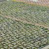 Pavimentazione grigliata carrabile giardino a senigallia (an)