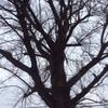 Potare o tagliare alberi