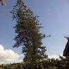 Potatura albero