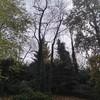 Potatura alberi giardino privato - si allegano foto