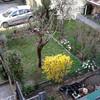 Potatura giardino