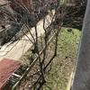 Taglio parziale albero a bollate