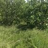 Pulizia e smaltimento terreno agricolo