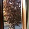 Potare albero