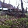 Taglio alberi di noce