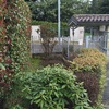 Ripiantunamento giardino