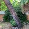 Abbattimento albero