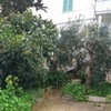 Manutenzione giardino e potatura alberi