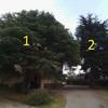 Abbattimento/potatura alberi