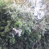 Taglio alberi e bambù su un fossato di confine con campi