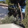 Abbattimento albero o potatura