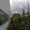 Sistemazione giardino 450mq capannone (fronte + retro)