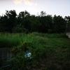 Pulire Terreno Agricolo
