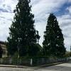 Potatura/taglio alberi d'alto fusto e sistemazione giardino mq 250