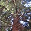 Taglio albero a lissago (varese)