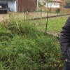 Rimozione erbacce e diserbatura giardino
