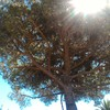 Potatura albero alto fusto