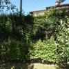 Potatura alberi e siepe lunga circa 25 ml
