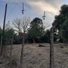 Costo per il taglio di due alberi secchi zona colle dei pini roma