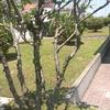 Giardinaggio condominio don landi anzola emilia