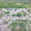 Cementare giardino esterno