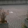 Sistemazione due fioriere condominio (lavoro + piante)